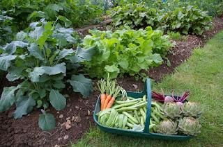 Dará CDMX taller para la producción de alimentos ecológicos