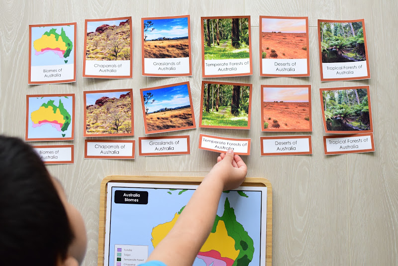 Oceania CONTINENT Study: BIOMES OF OCEANIA 3 PART CARDS