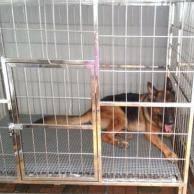 Jual Kandang Anjing Kucing Burung Aluminium Stainless Steel Murah Besar Di Jakarta Tangerang Bekasi Jual Kandang Anjing Aluminium Stainless Steel Murah Bagus Besar Keren Kece Kuat Berkualitas Dan Anti Karat Serta
