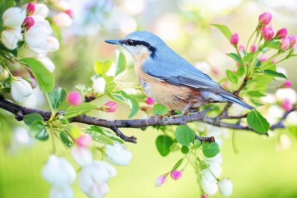 الطبيعة غذاء للروح وراحة للنفس