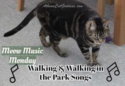 tabby cat walking on carpet