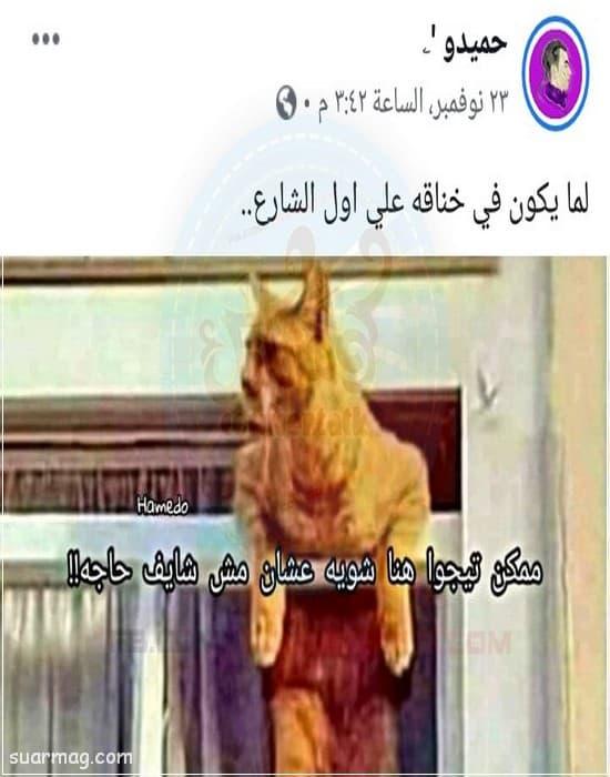 حالات واتس مضحكه قصيره 3 | Short Funny WhatsApp Status 3