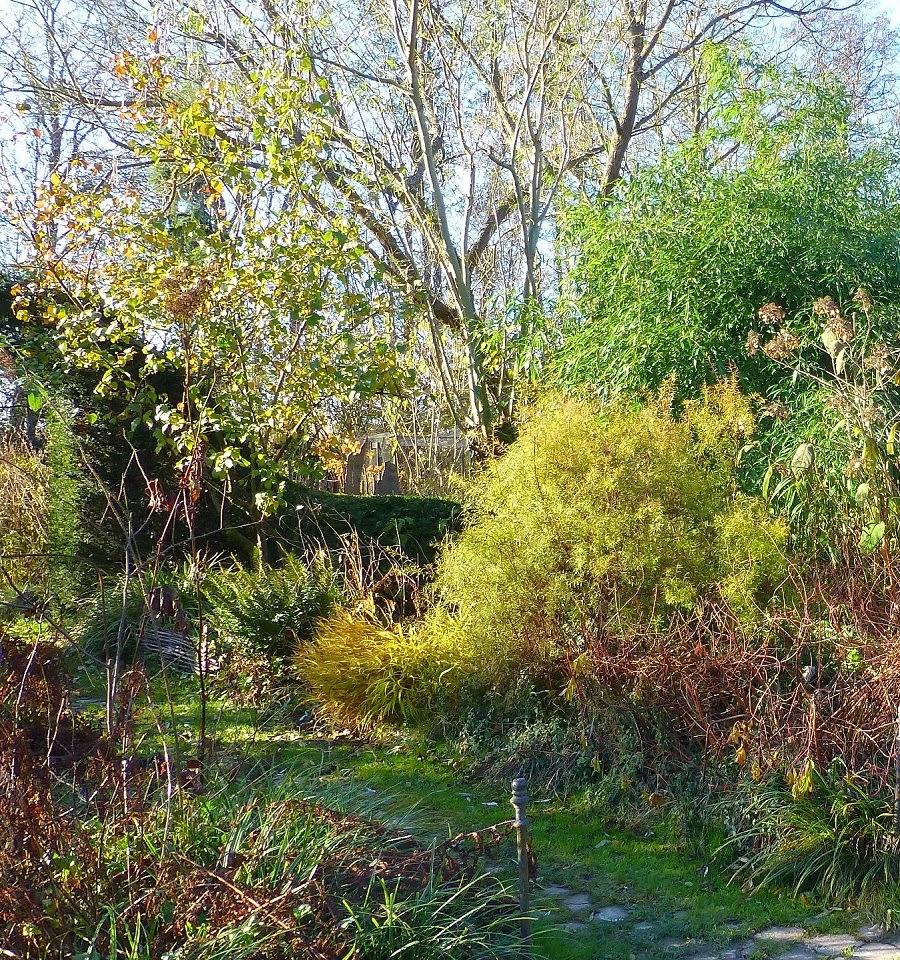Le jardin de brigitte alsace novembre - Jardin novembre ...
