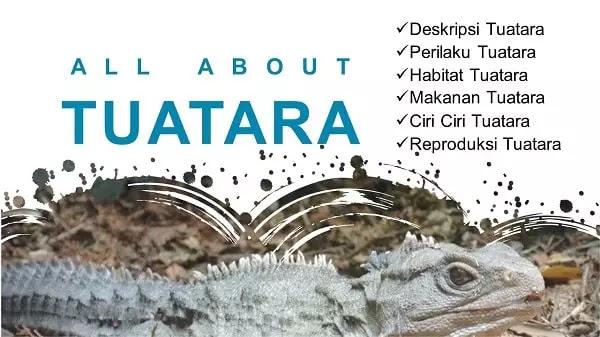 Informasi Lengkap Tuatara