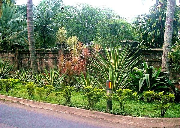 Unique Garden Ideas With Aloe Vera Agit Garden Collections