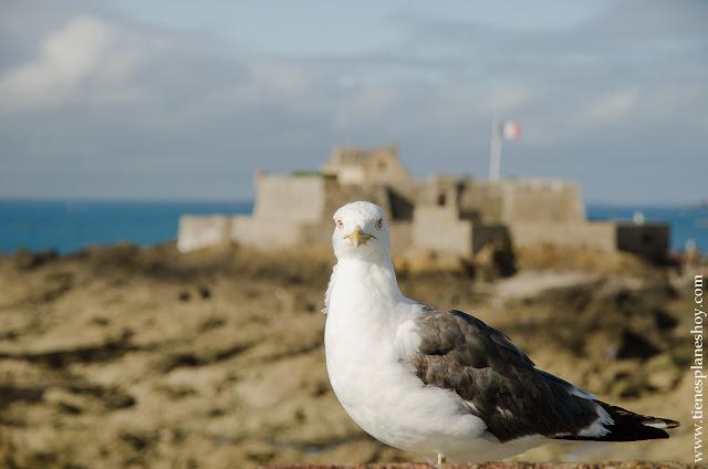 Saint-Malo viaje Bretaña Normandia imprescindibles turismo