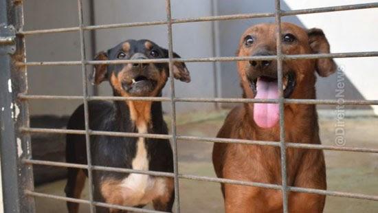 stf inconstitucional abate animais maus tratos