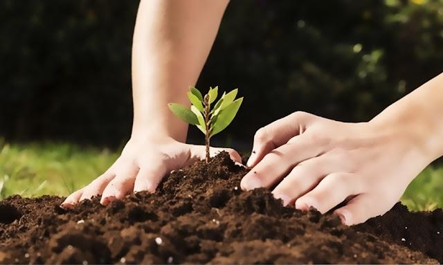 5 de junio se recuerda Día Mundial del Medio Ambiente