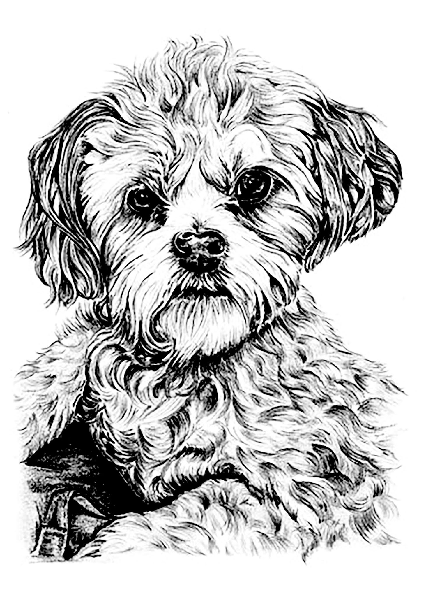 Dogs coloring pages 90