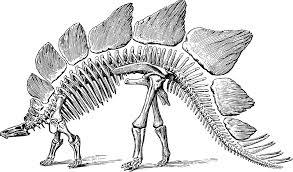 Kaç Çeşit Dinozor Vardır, Genel Özellikleri Nelerdir?