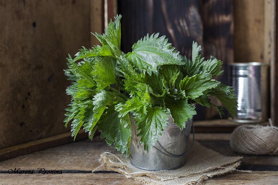 Krapiva Растения Для Сада Интернет Магазин