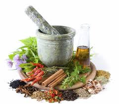 Obat Herbal Untuk Mengobati Sipilis