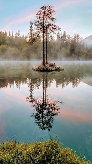 Wallpaper tree on the lake