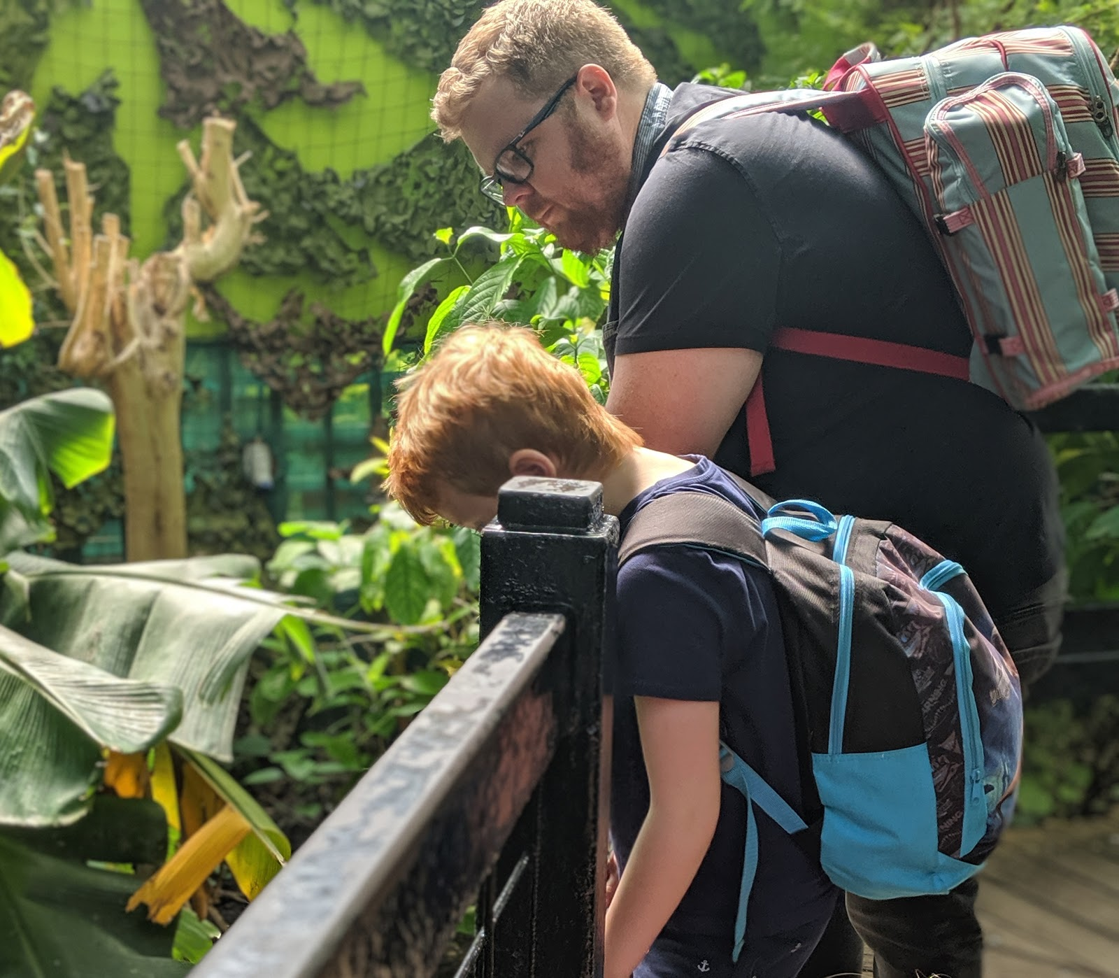 A Short Break in Leeds with Holidays by National Express  - Tropical World Butterflies