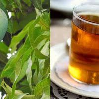 Chá de folha de manga: benefícios para a saúde geral do corpo