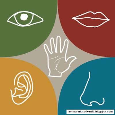 Five sensory organs