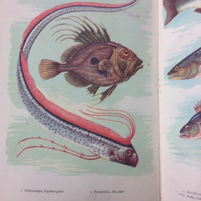 Valokuva kalakirjan sivusta, jossa on airokala ja jokin toinen kala