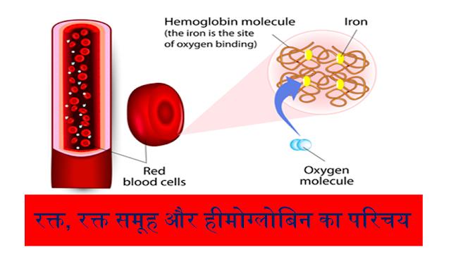 रक्त, रक्त समूह और हीमोग्लोबिन का परिचय - Introduction to blood, blood group and hemoglobin