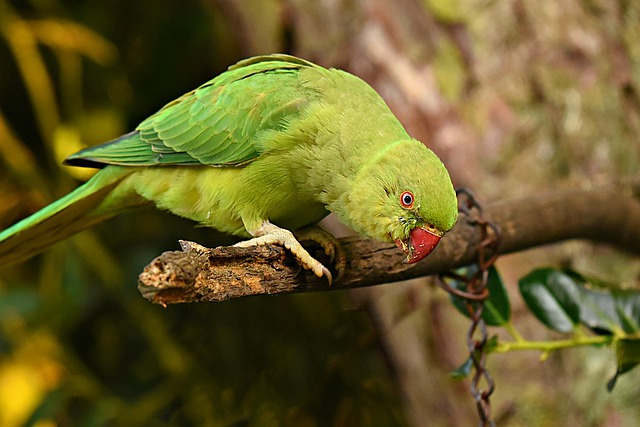 Information On Parrot In Marathi, essay On Parrot In Marathi