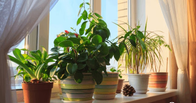 indoor ornamental plants with names and pictures