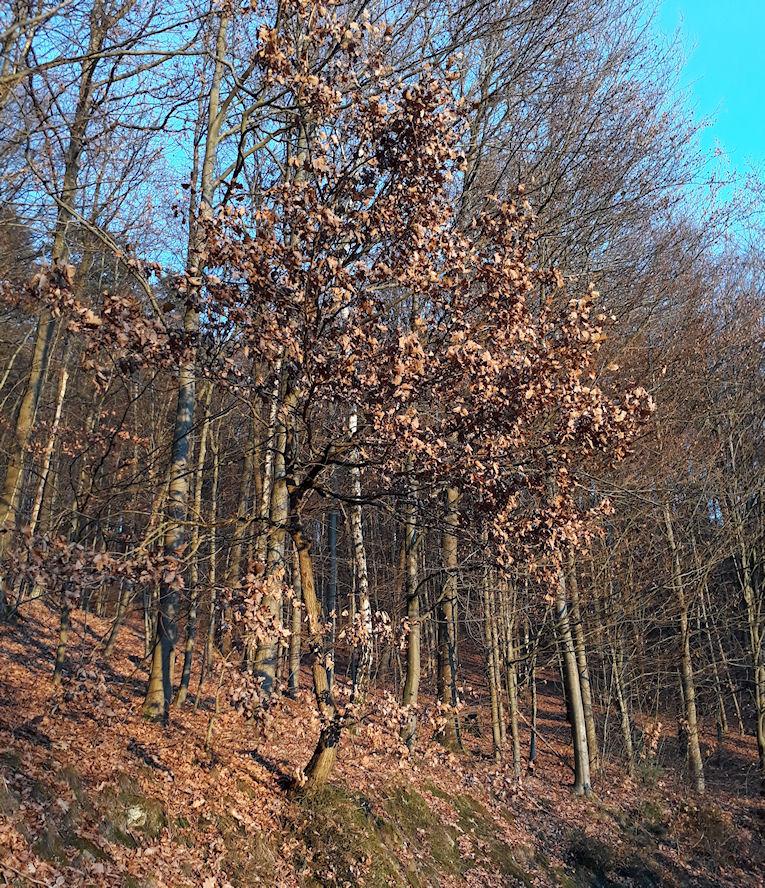 Herbst im Eichwald
