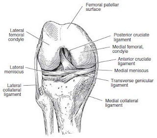 Anterior view of the right knee