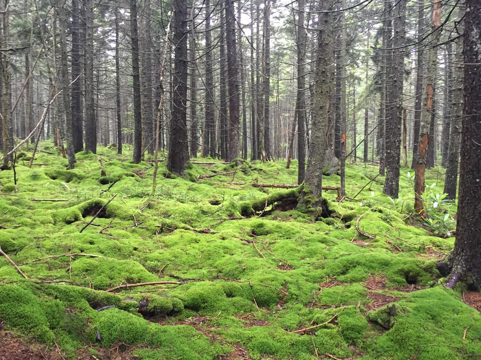 Wandering Virginia: Cranberry Wilderness, West Virginia