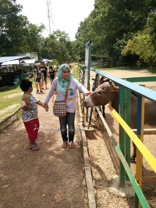 Jalan-jalan di PD Ostrich Farm