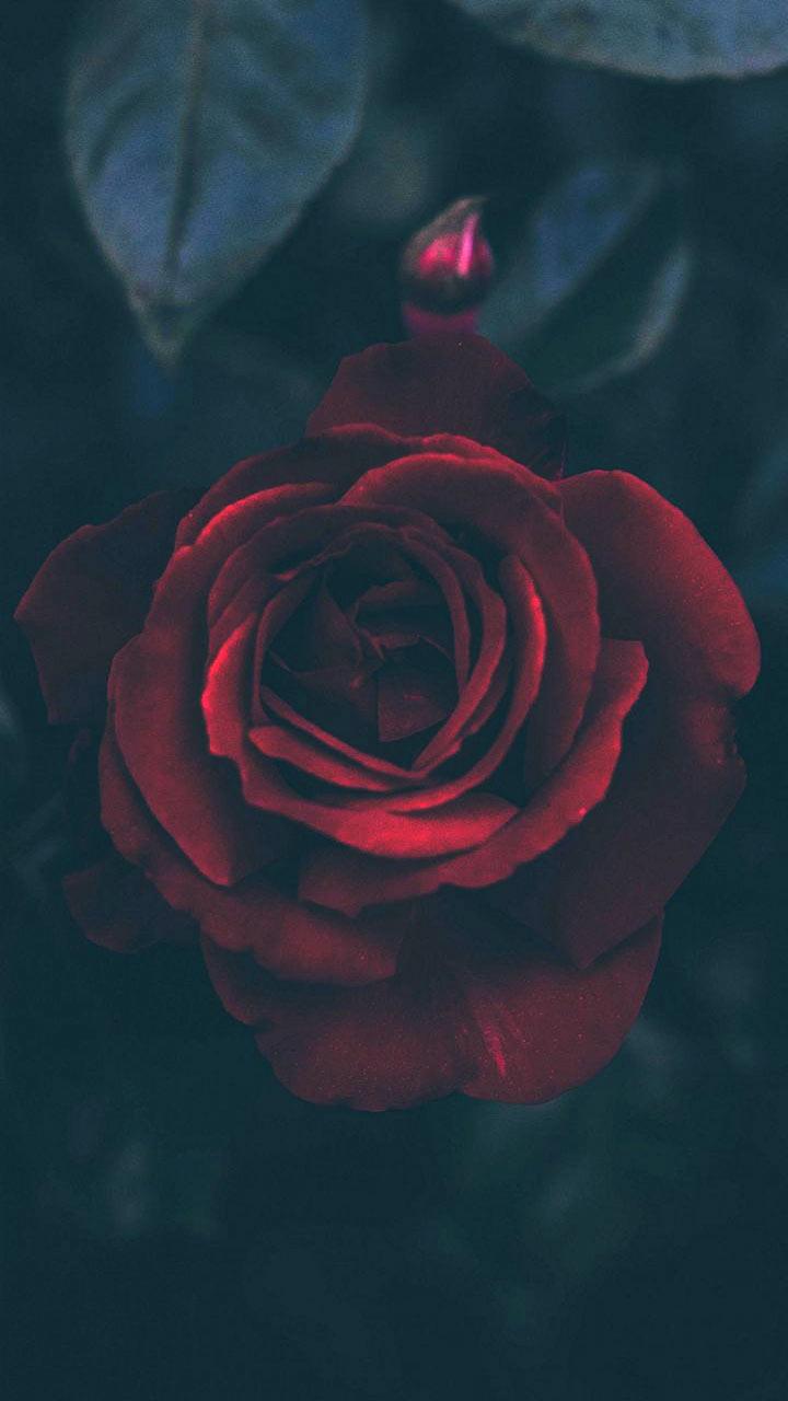 Papel De Parede Tumblr Rosa Vermelha