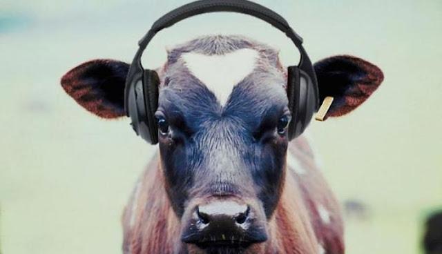klappidega-lehm