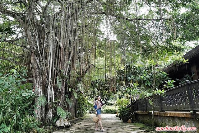 Aman Rimba Private Estate, Aman Rimba, Nature Getaway, Janda Baik, Bentong, Pahang, Nature Staycation, Resort Review, Green Vacation, Environmental Vacation, Back to nature