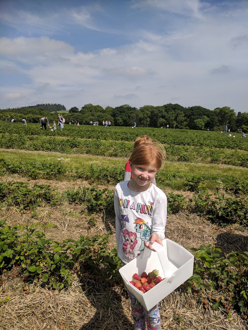 A Guide to Strawberry Picking at Brocksbushes in Northumberland  - strawberry fields