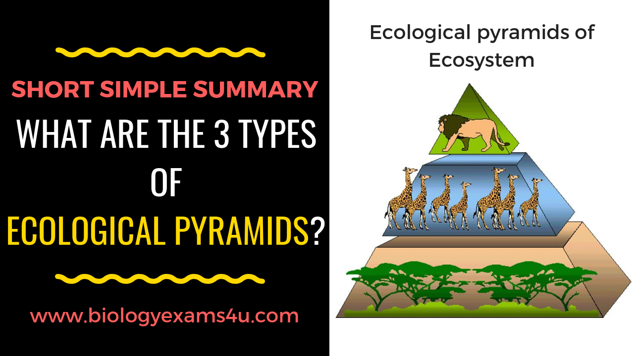 What are the 3 types of Ecological Pyramids? A short simple Summary