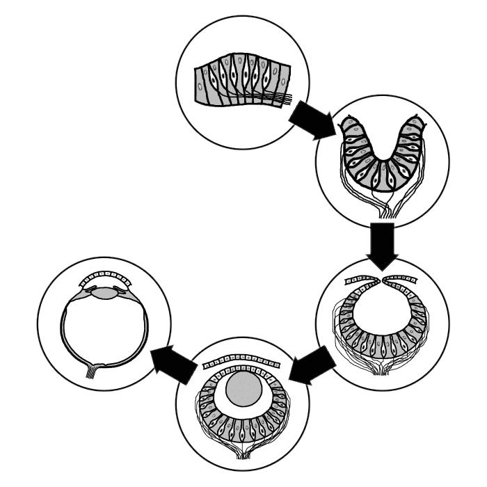 radiometrinen dating todistaa evoluution