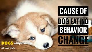 Eating problem of dog solution