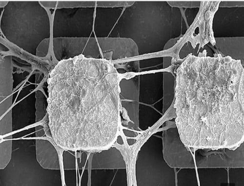 Brain stem cells support artificial intelligence