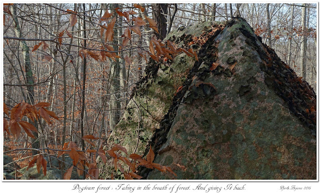 Dogtown forest: Taking in the breath of forest. And giving It back.