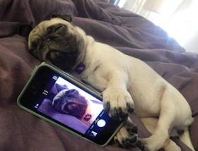 Smešan selfi sa pasom na telefonu