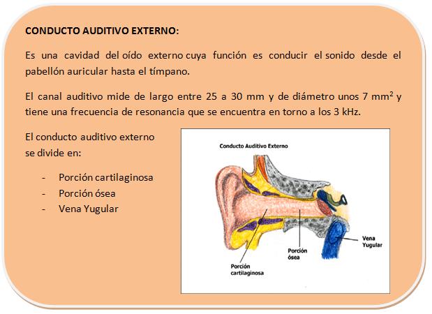 El Sonido del Silencio: 03. Anatomía del oído