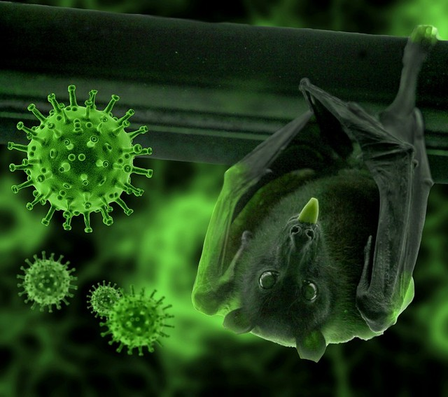 "confirman pacientes COVID-19 infectados por ""hongo verde"""