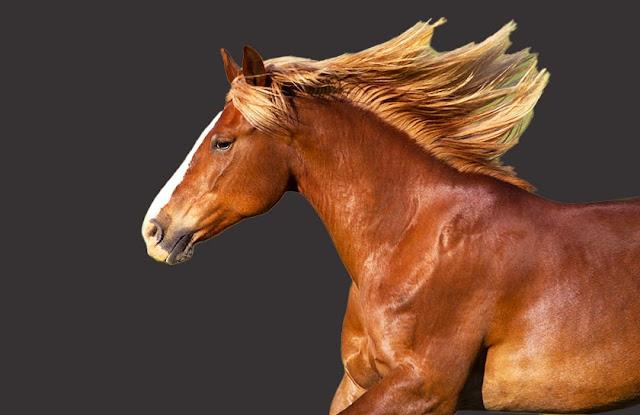 馬の画像:被写体を選択