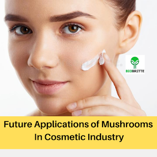 Future Applications of Mushrooms In Cosmetic Industry