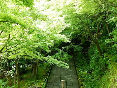 長谷寺の新緑