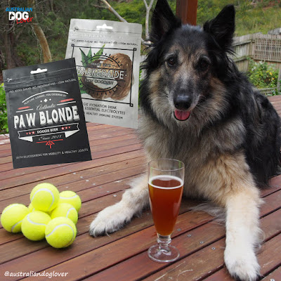 Conner Belgian Tervueren with a glass of L'Barkery Paw Blonde doggie beer