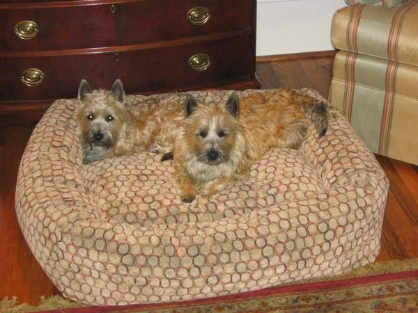 Sophie & Jasper missing in SC