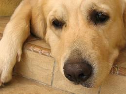 Dog Allergy Symptoms