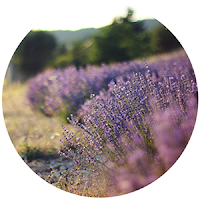 http://daydreamincolors.blogspot.fr/2012/07/dreaming-in-lavender.html