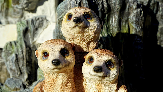 Adorable Close-up Cute Eyes Zoo Animal HD Wallpaper