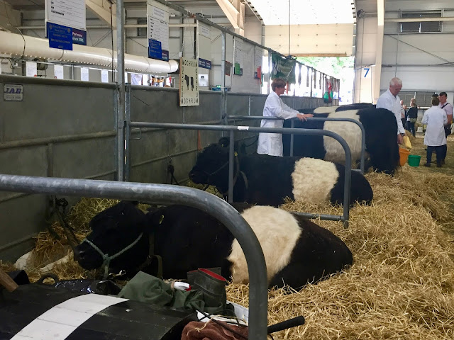 Cattle hall at the Royal Highland Show, Edinburgh, Scotland