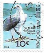 Selo Águia-marinha-de-barriga-branca